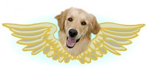 Golden Angel Logo
