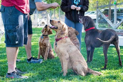 Golden Rule Training Class Obedience